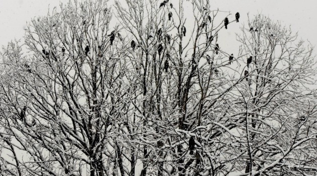 Pictures of snowfall