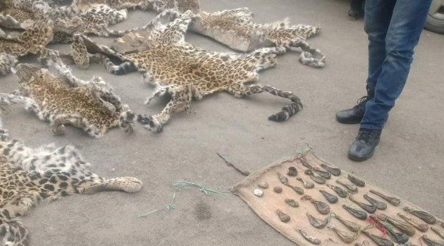 Police Recovers Skin of Banned Animals in Shirpora Anantnag